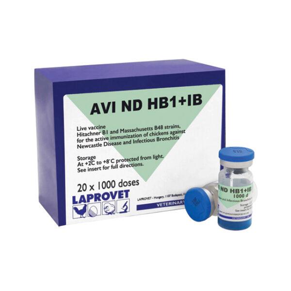 HB1+IB